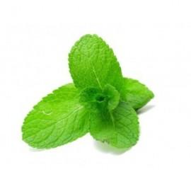 E-liquide goût saveur Menthe pour votre E-cig